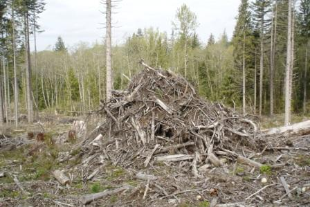 forestry slash pile